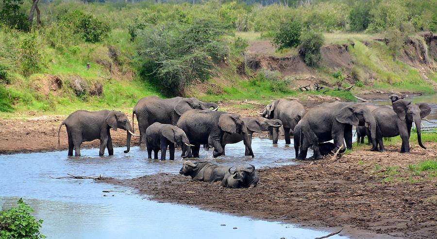 Набор группы в Африку