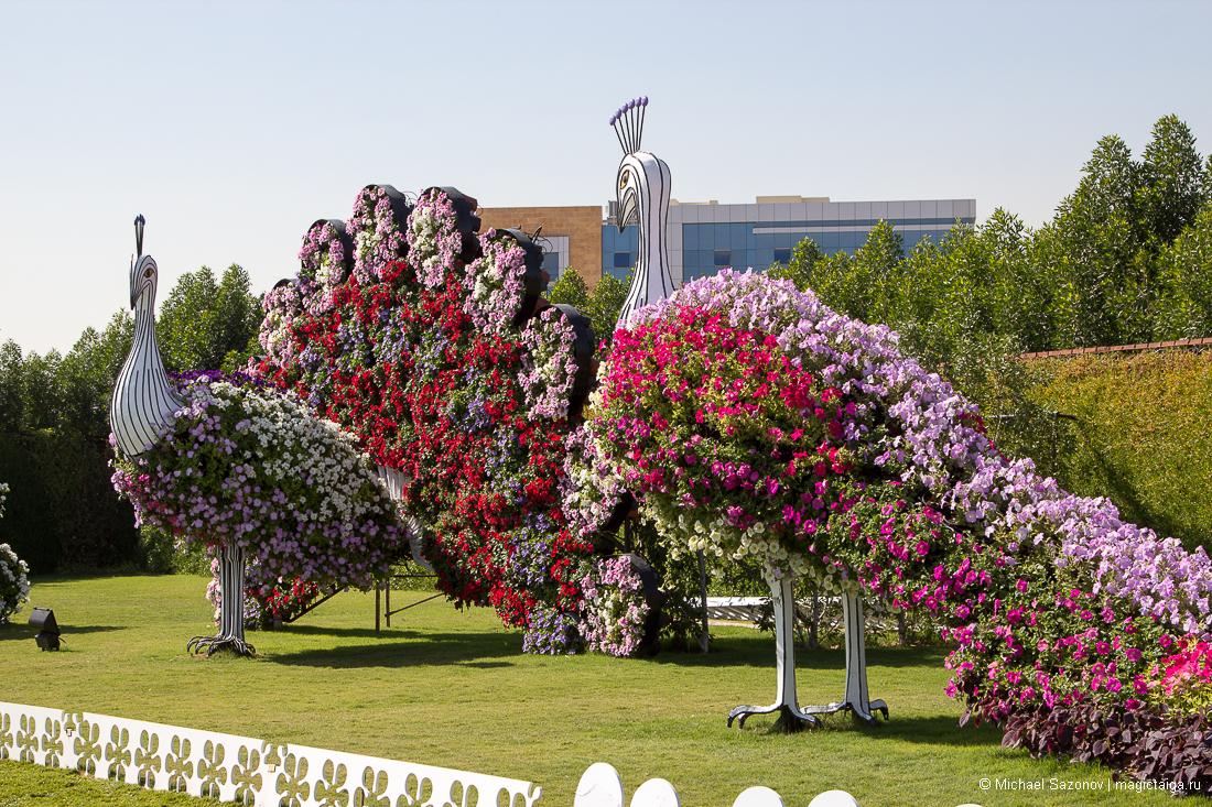 волгограда готовы фото городских цветочных аллей водители получают