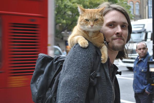 street_cat_bob