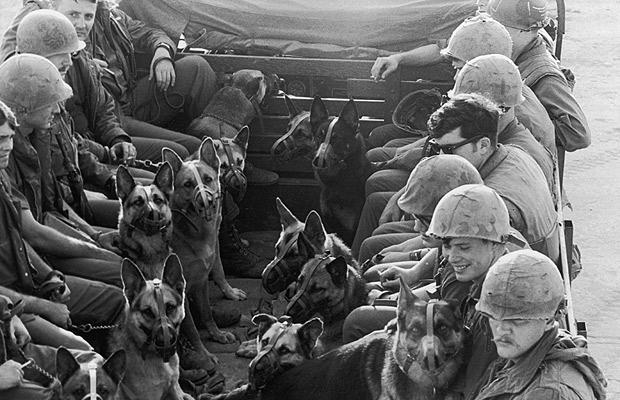 dogs-vietnam_1511091i