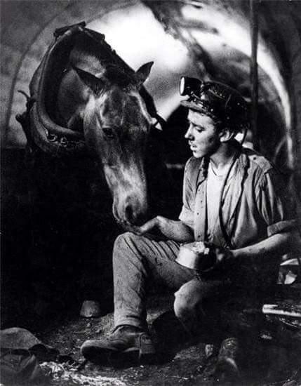 лошадь5