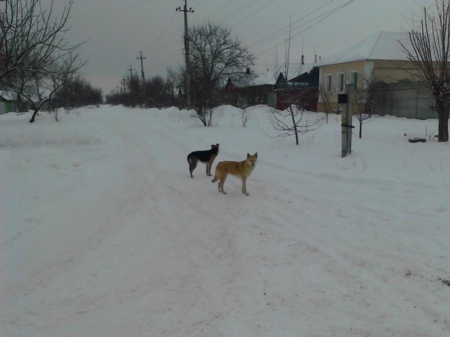 Луганск 043