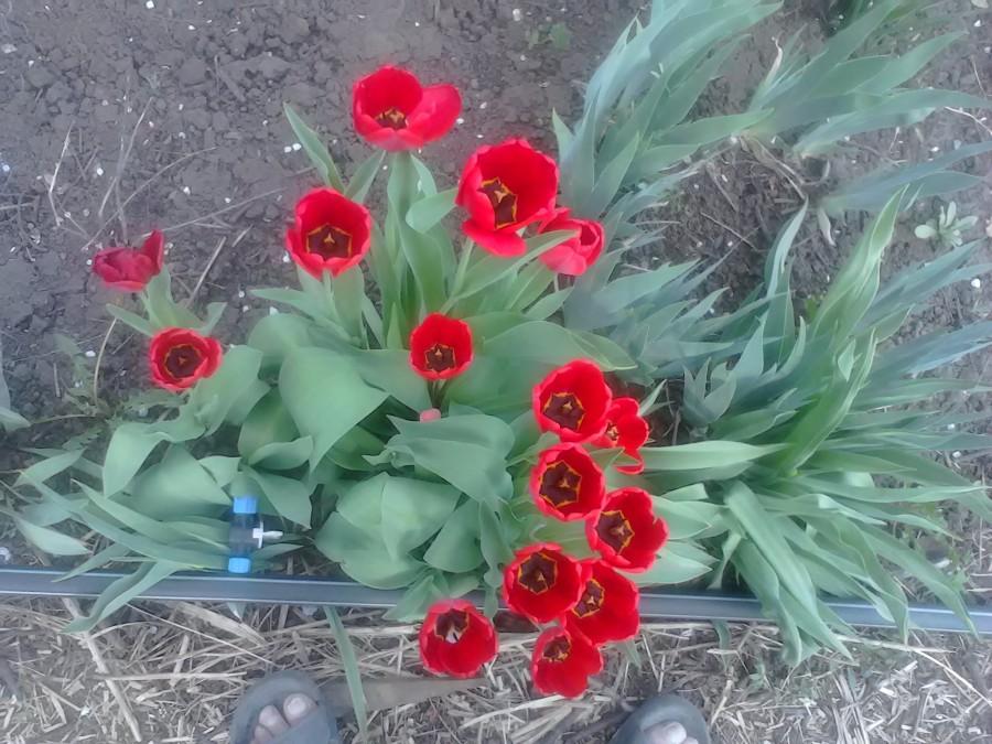 Луганск 054