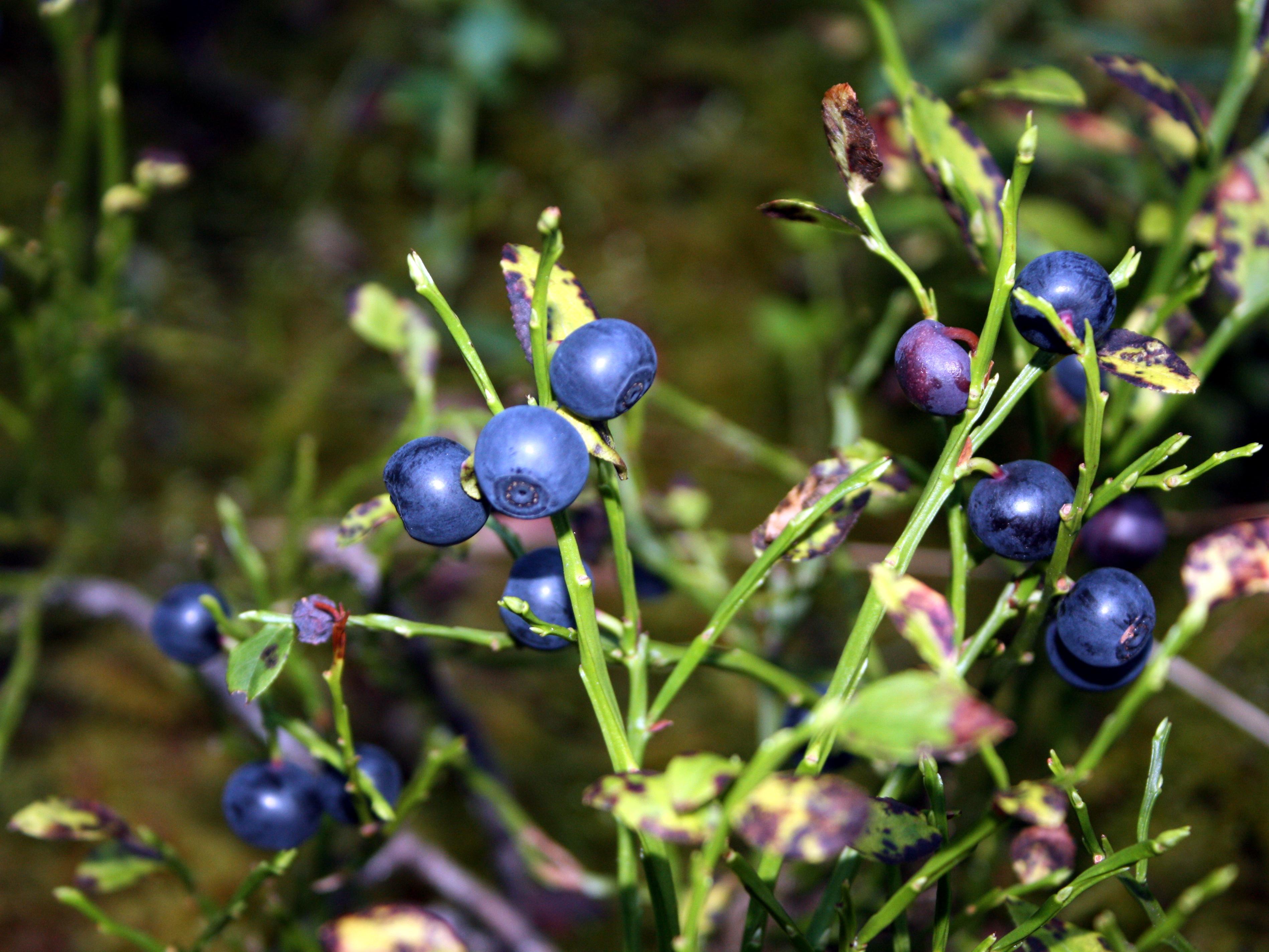 Фотосессии в лесу с ягодами 14 фотография