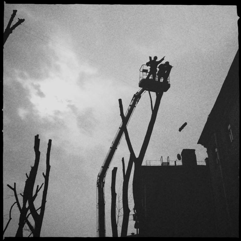 Обрезка и кромсание деревьев в центре Минска