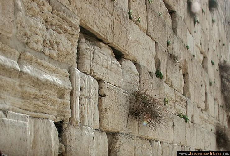 Иерусалим. Стена плача. Пустоты!!!
