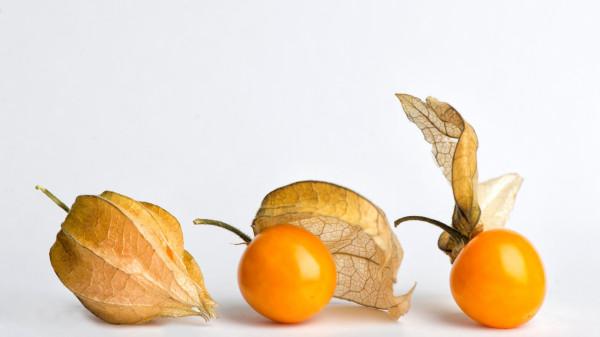 fizalis-plody-yagody-semena