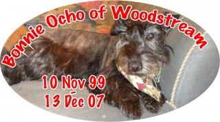 A Picture of Bonnie Ocho of Woodstream; 10 Nov 1999 - 13 Deb 2007