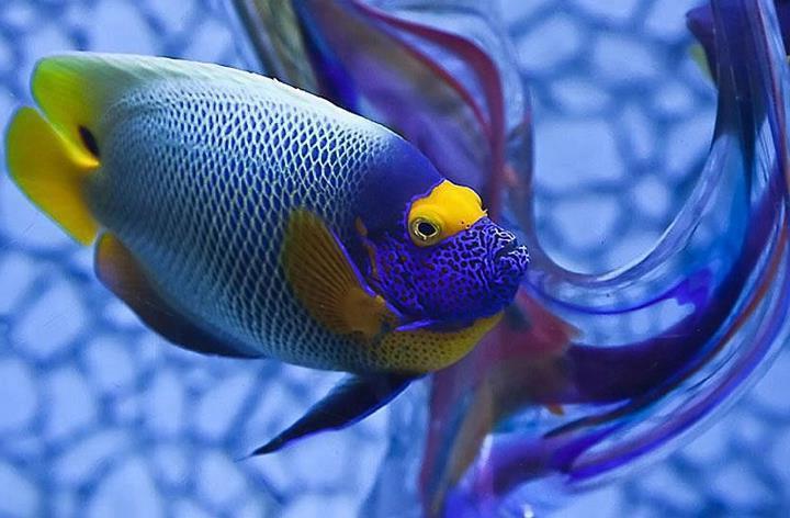 Beautiful angelfish!