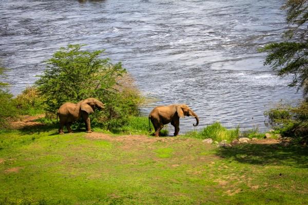 Завтрак со слонами
