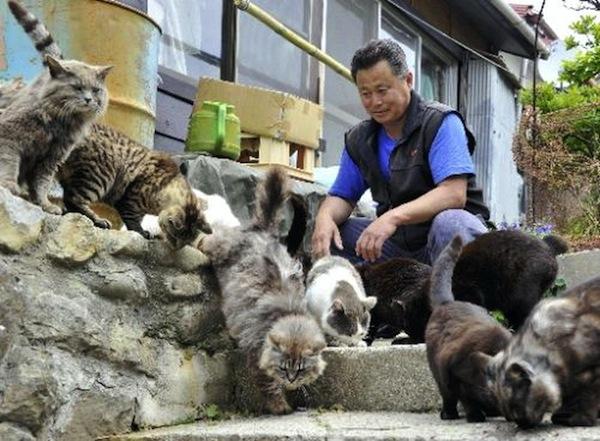 ghadi news - TashiroJima island cats634924655038826250