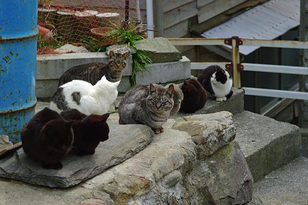 cat-island-cats
