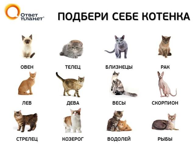 Подбери себе котенка