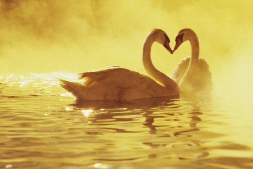 Почему мы празднуем День Святого Валентина?