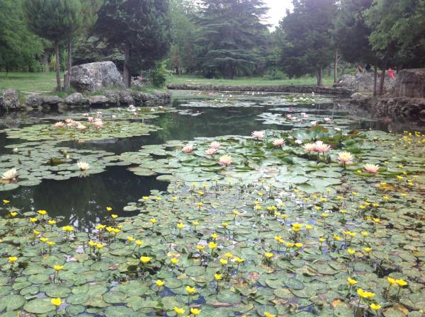 воронцовский парк 031