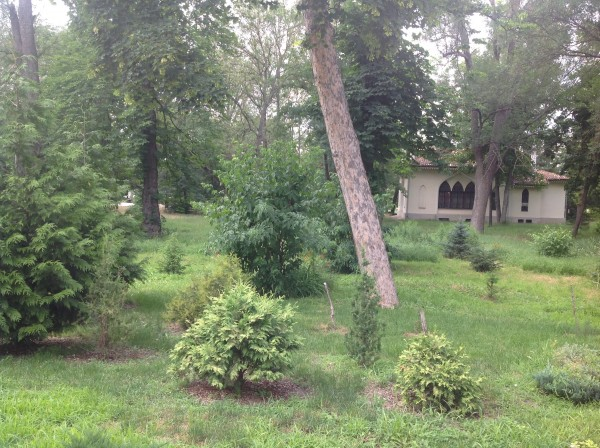 воронцовский парк 072