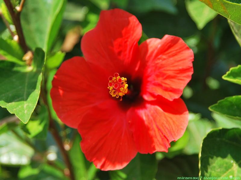 цветы греции названия и фото