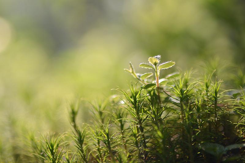 Утренний рассвет... Солнце поднималось над землей... (С)