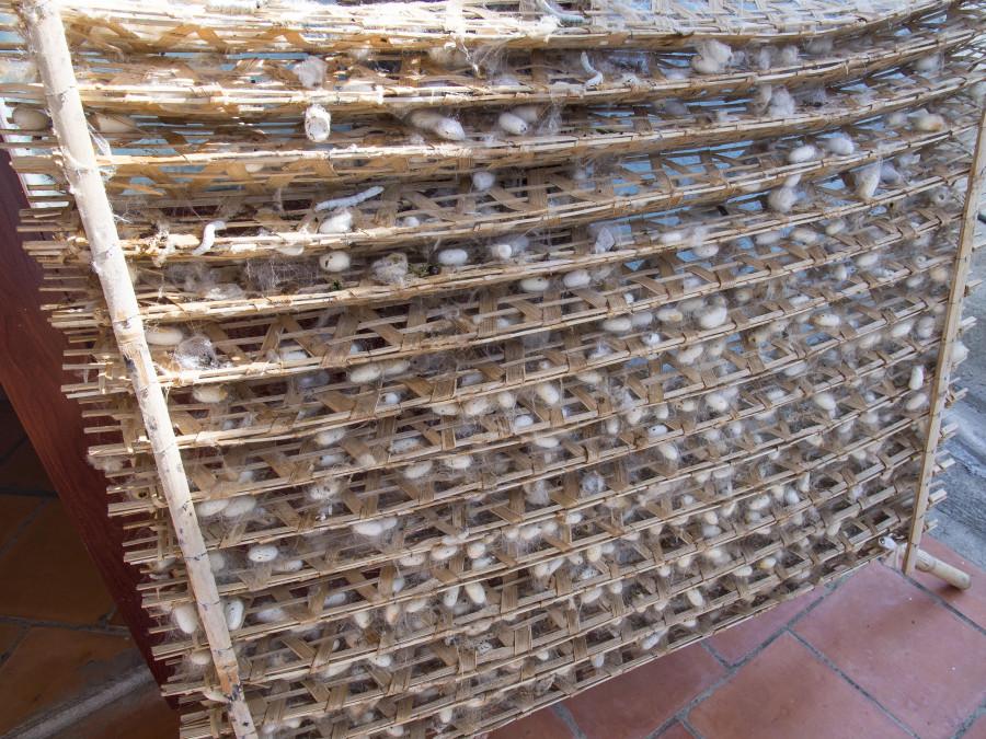 vietnam500