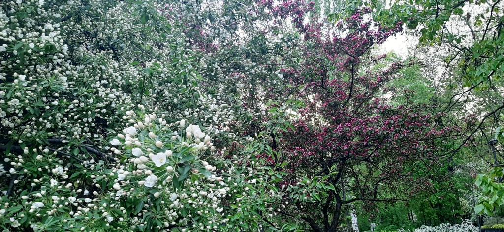 Ершики, лампочки и прочая цветущая икебана