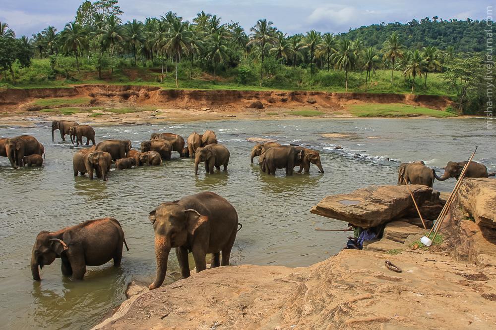 Шри-Ланка 2009. Оглавление