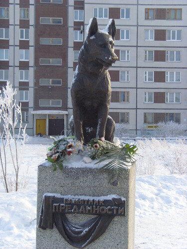 Пёс Константин