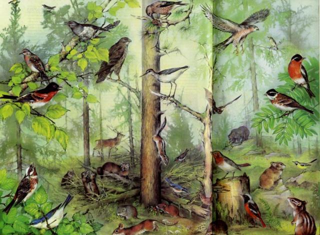лесные птицы картинка для детей