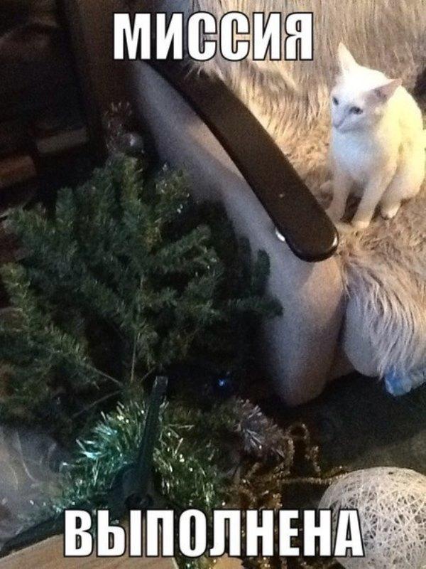 коты-елка-песочница-518183