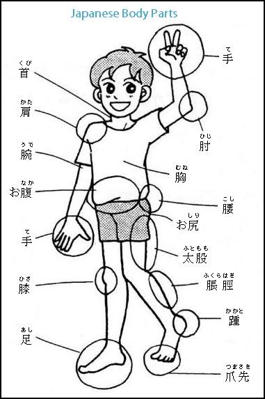 japanese-body-parts