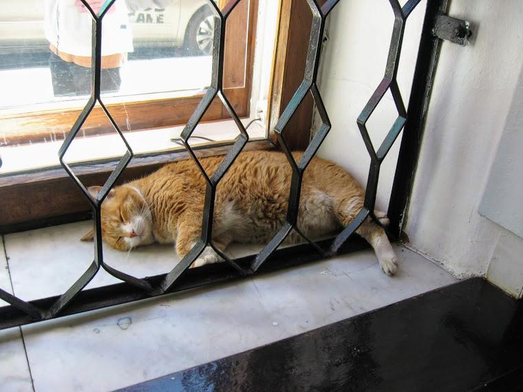 Коты — экуменисты, артиллеристы, садовники, смотрители...