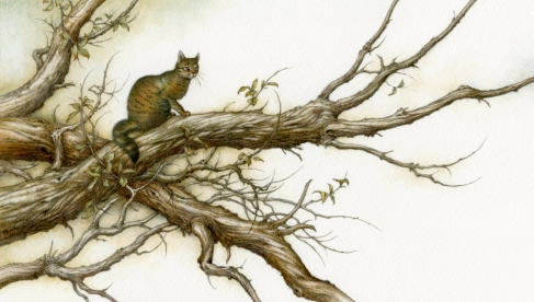 https://himmapaan.wordpress.com/2013/04/11/the-cat-that-walked-by-himself/