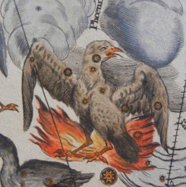 375px-Phoenix_in_Doppelmayr's_Atlas_Coelestis