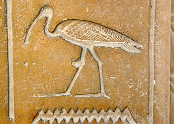 6ed-ibis-583x938