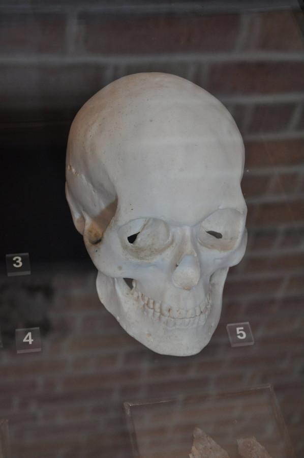 череп софии полоцкой