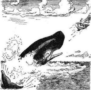 кит врунгель.jpg
