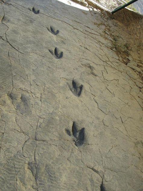 Ла ройя испания следы динозавров