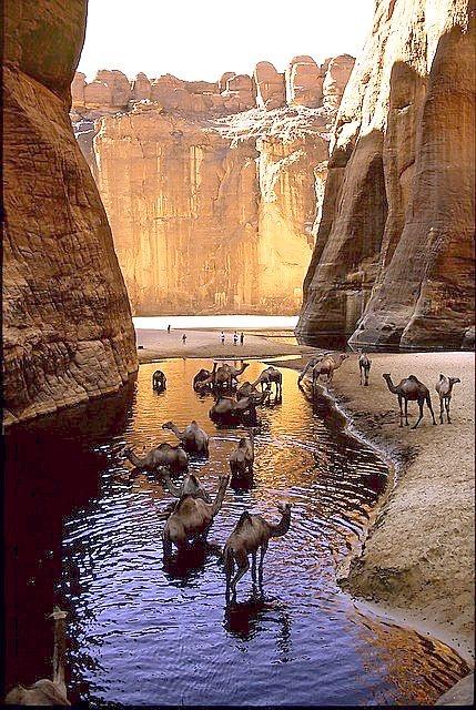 оазис Guelta d'Archei 16