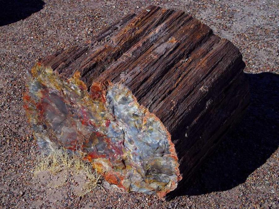 Стволы деревьев в американском штате Аризона подверглись метаморфическим изменениям превратившись в монолиты из опала халцедона кварца и сидерита