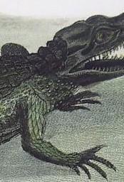 крокодиловая рука3-2