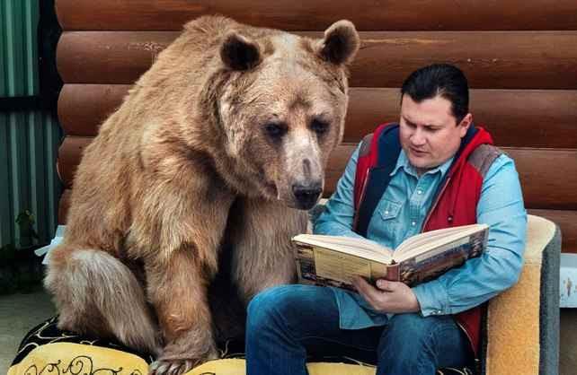 медведь степан3
