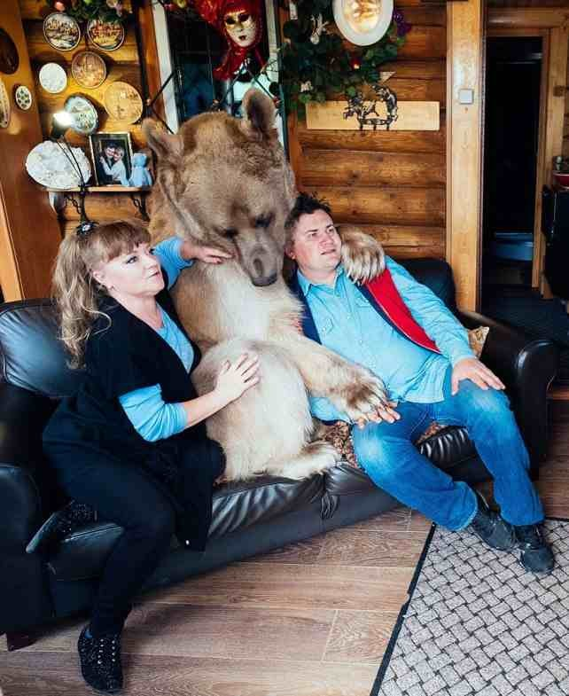 медведь степан2