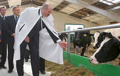 коровы луки для ТВ