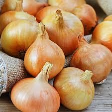 onion-bulb-