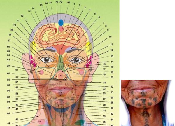 схемы проекционных зон на голове совмещены с тату2
