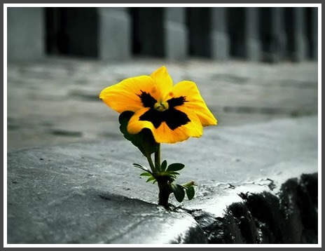 persevere-flower-in-concrete