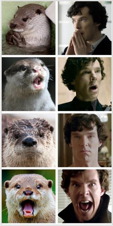 benedict otters