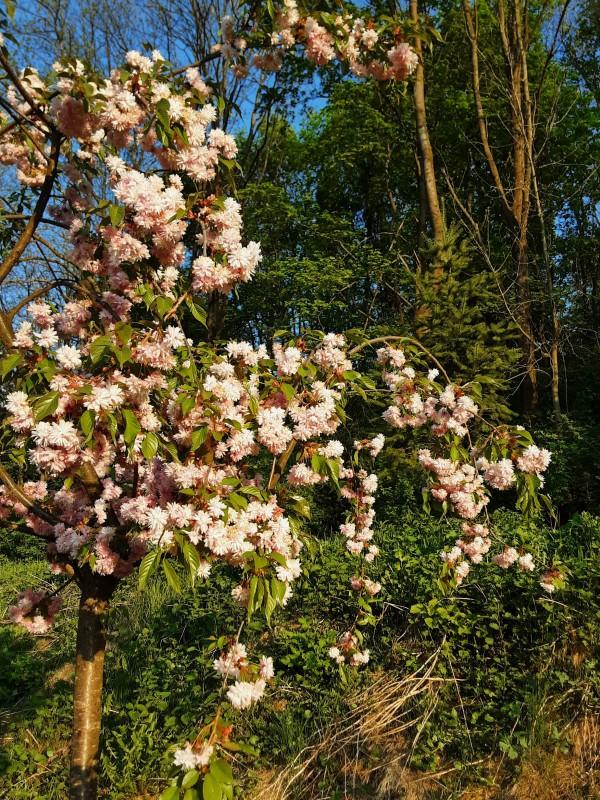 Майские цветы-2
