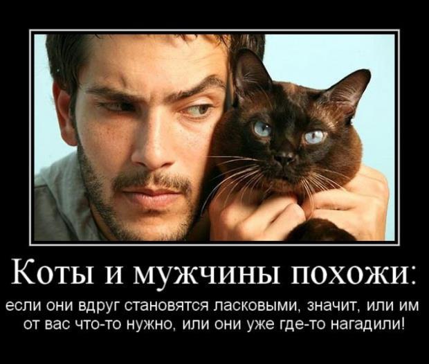 1391151679_megakote.ru_2_0010_371