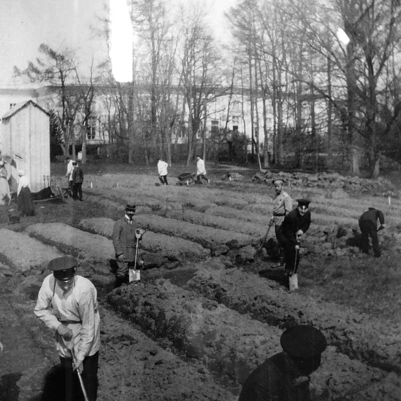 Работа в огороде, разбитом в Царском Селе.