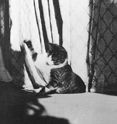 Васька, любимый кот Ольгий Николаевны.